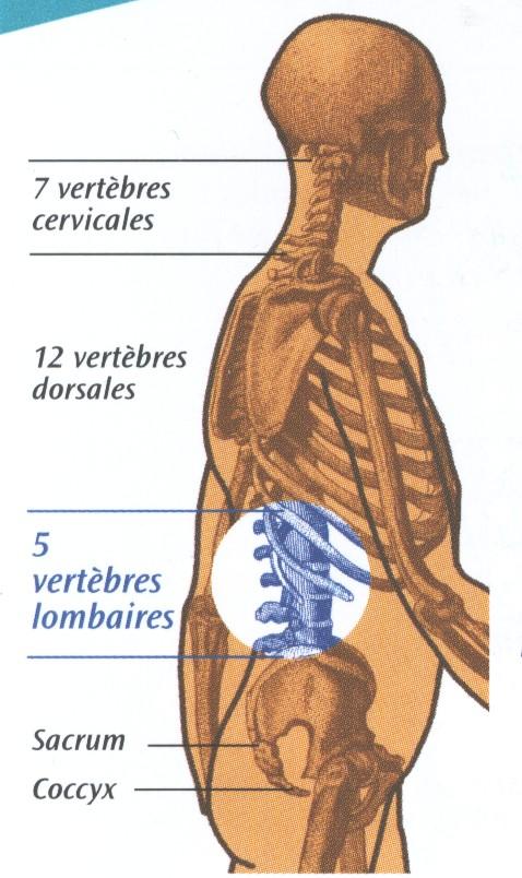 Fait mal le dos à gauche sous lomoplate réduit